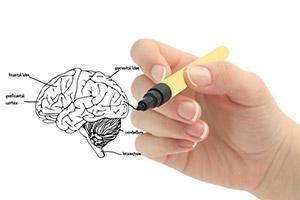 Mano di donna che disegna un cervello su una superficie trasparente